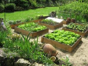 un potager dans le jardin sem jardin. Black Bedroom Furniture Sets. Home Design Ideas