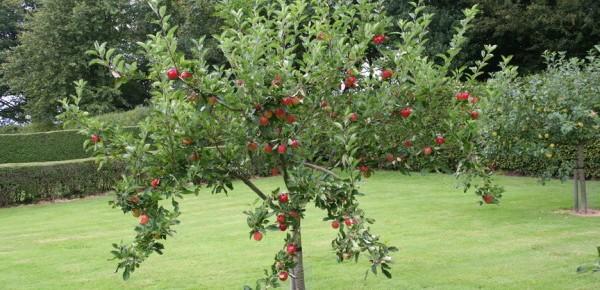 jardin-arbre-fruitier