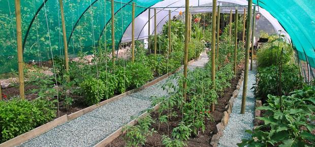 sem jardin conseils et astuces pour avoir le plus beau jardin du voisinnage. Black Bedroom Furniture Sets. Home Design Ideas