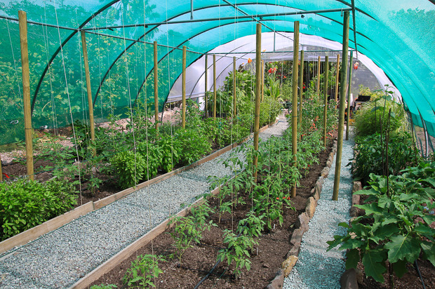 Potager biologique comment s y prendre sem jardin for Bio jardin didenheim