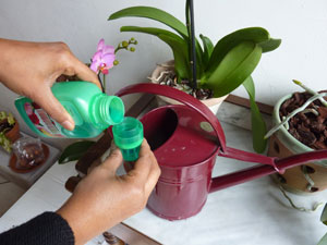 orchidee-apport-engrais
