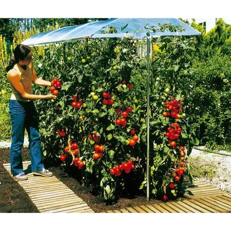 Comment faire pour avoir de belles tomates sem jardin - Que faire avec des tomates du jardin ...