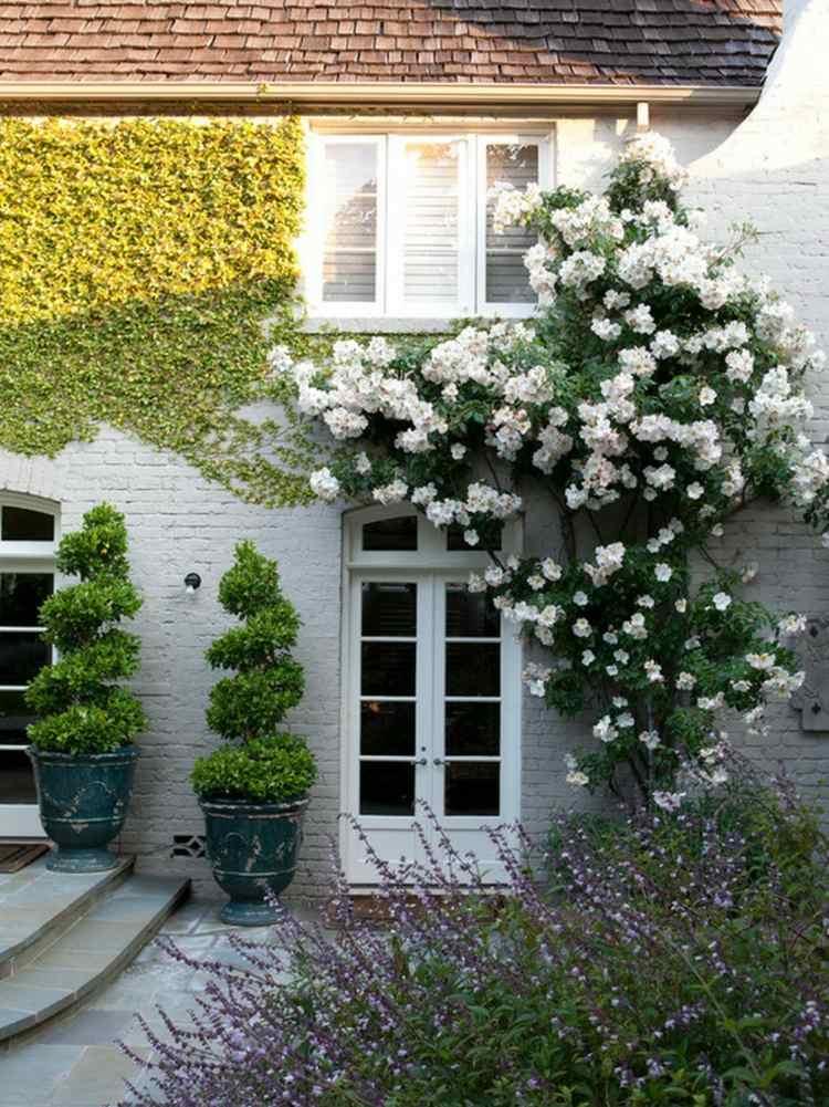 Quelles plantes choisir pour un beau jardin sem jardin for Plantes pour jardin anglais