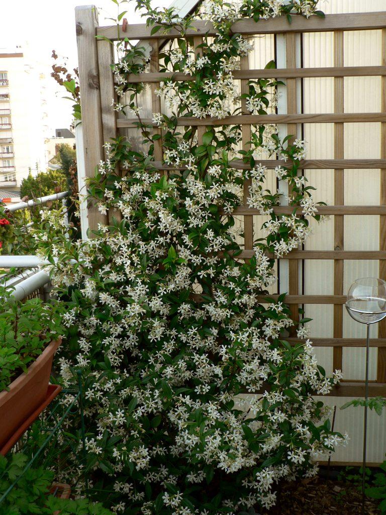 Quelles plantes choisir pour un beau jardin sem jardin for Choisir plantes jardin