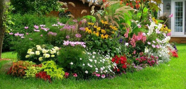 plantes-ombre-plantes-embellir-jardin-facade