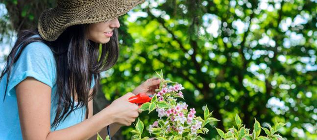 Sem jardin conseils et astuces pour avoir le plus beau for Realiser un beau jardin